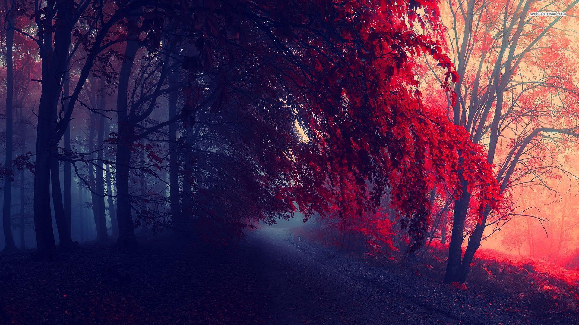 Картинки необычные осень